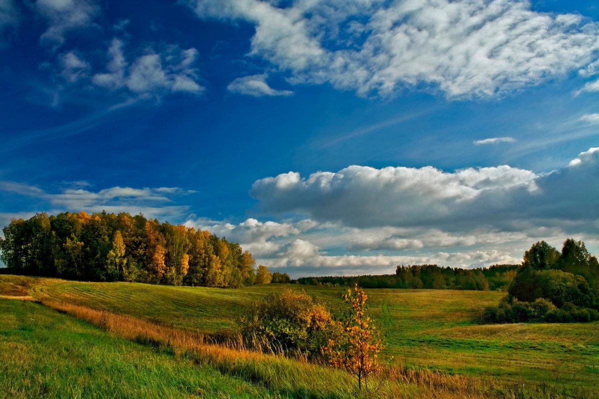 них был эстония природа пейзажи фото сельди яиц