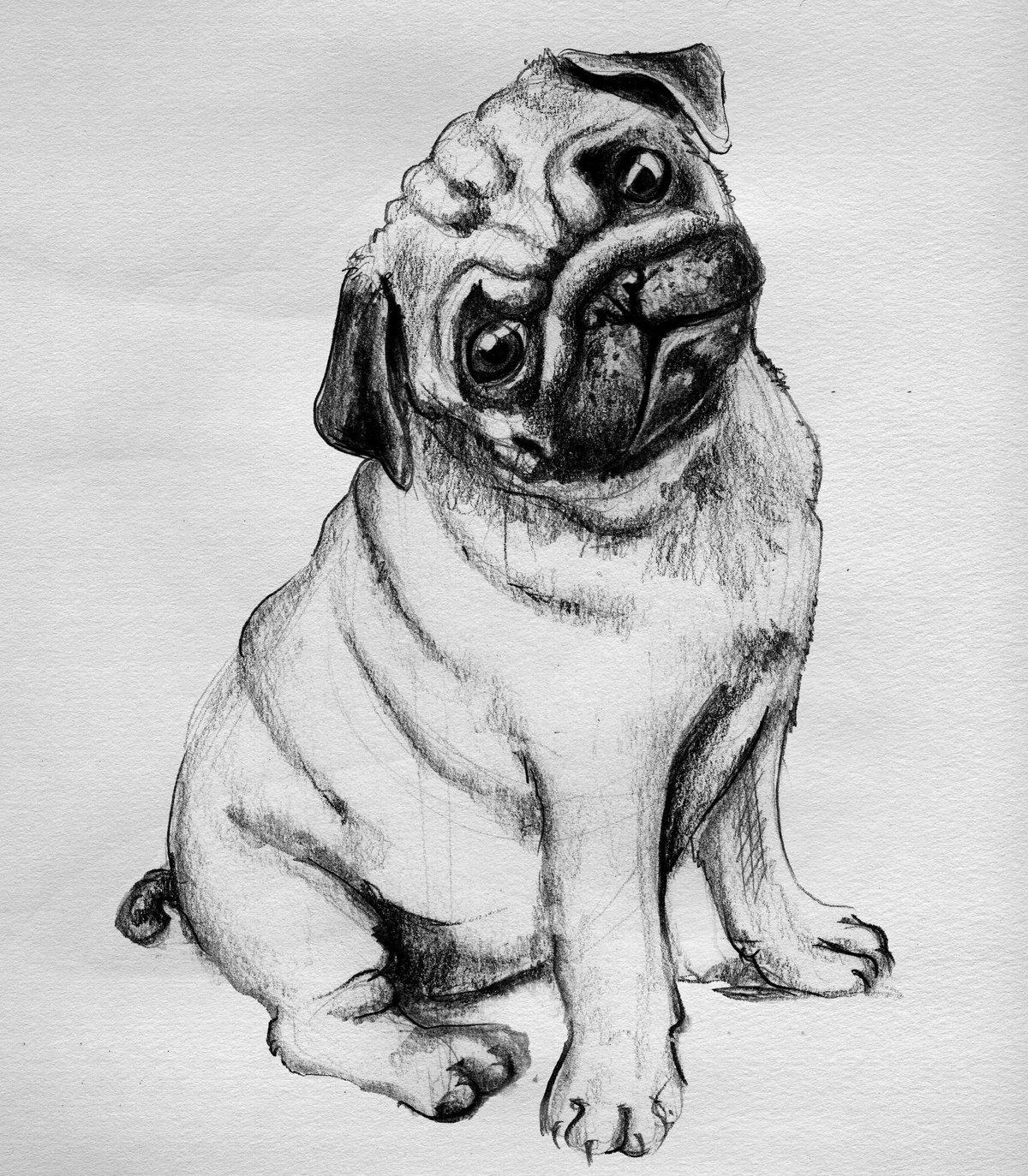 Собаки злой, прикольные картинки собак для срисовки