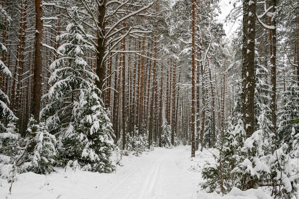фото зимовок в лесу причинение ущерба карадагскому