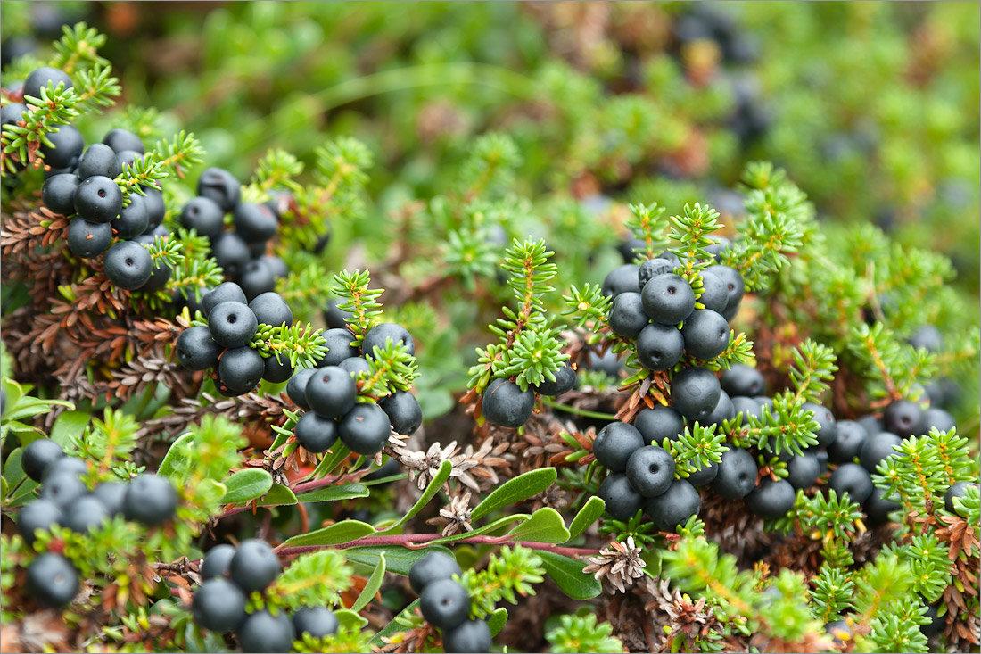 Лесные травы севера фото и названия