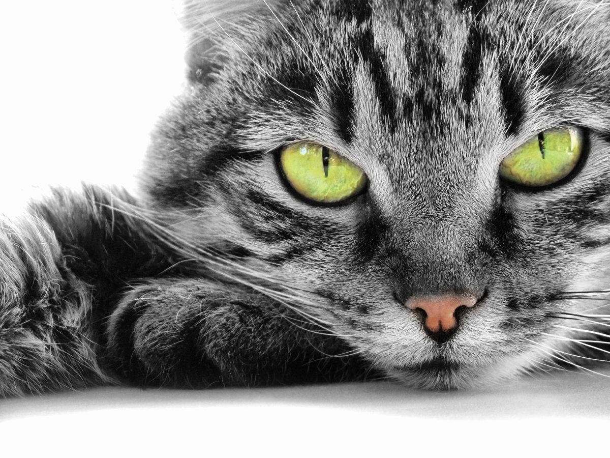 Приколом субботник, красивые картинки с котами