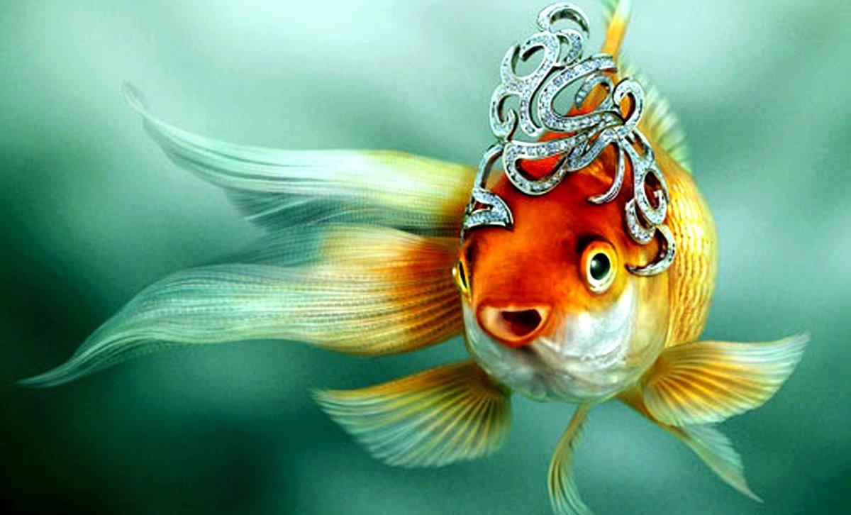 Днем, картинки прикольные с рыбками