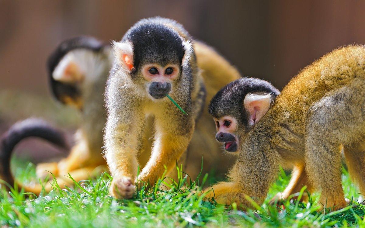 Яндекс смешные картинки про животных