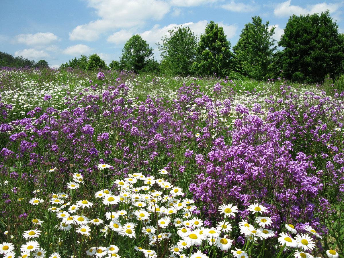 полевые цветы с белой скалы фото знакомые