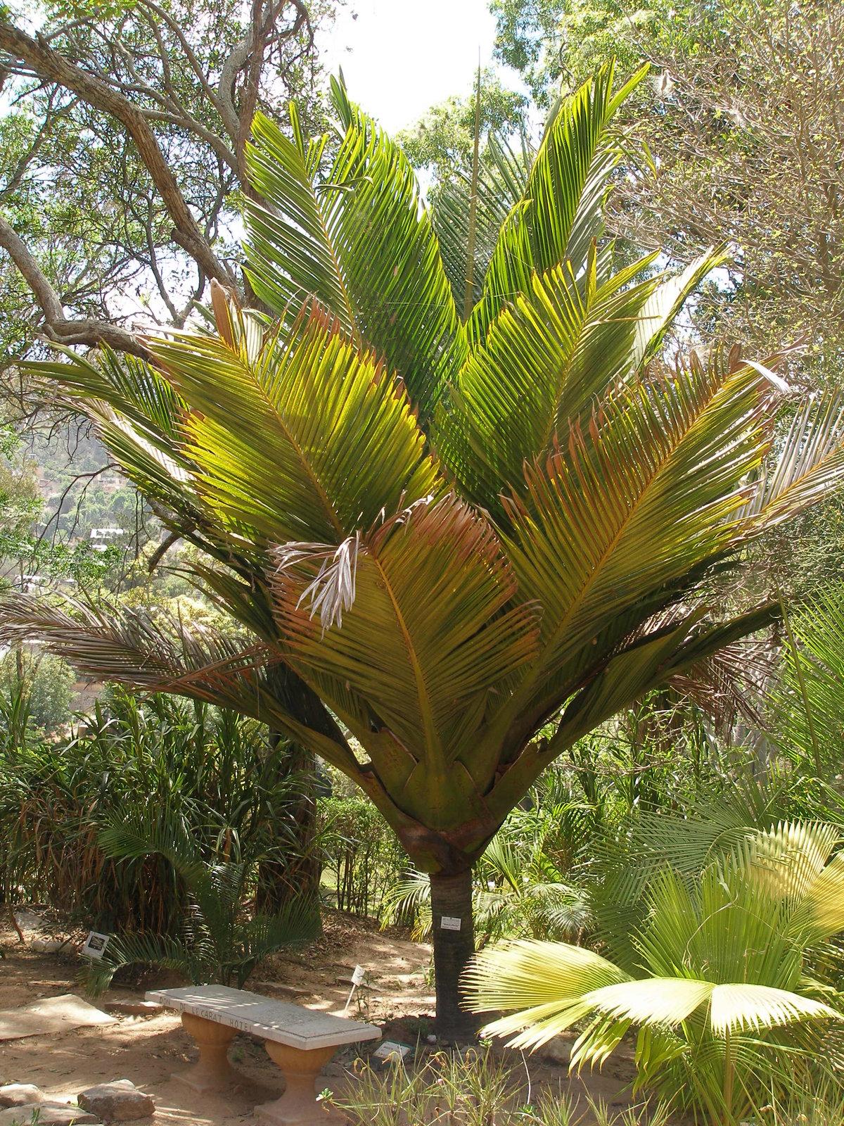 фотографии папоротников пальм полностью