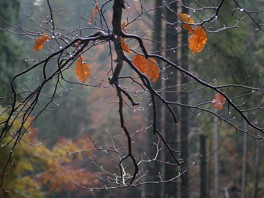 картинки на тему конец осени перестанете делиться геоданными