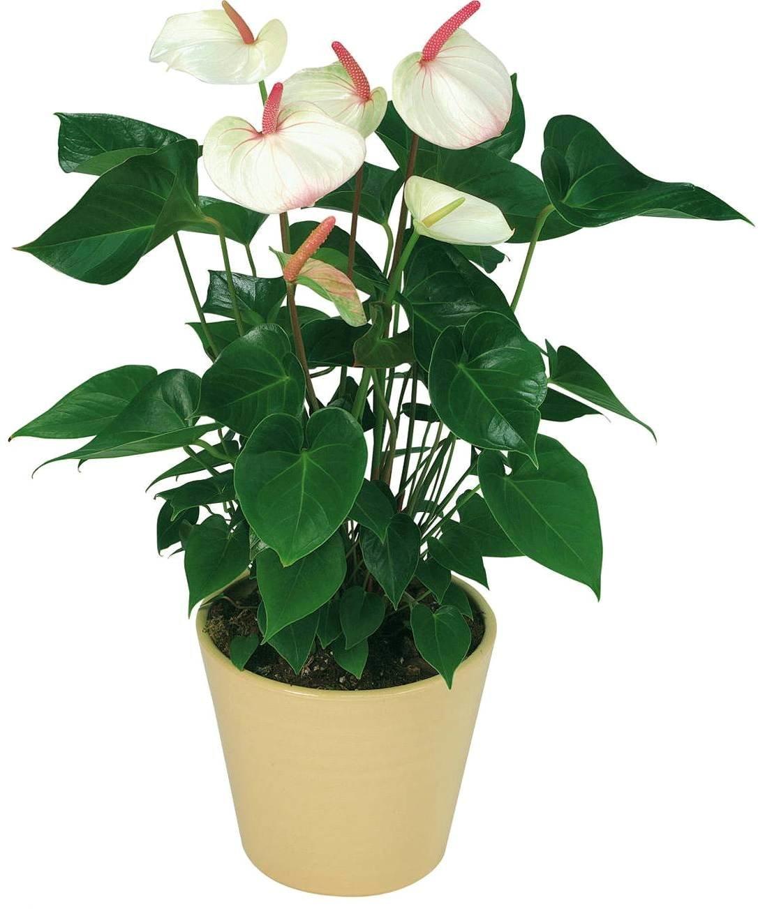 комнатными растениями с картинками телефон, особой