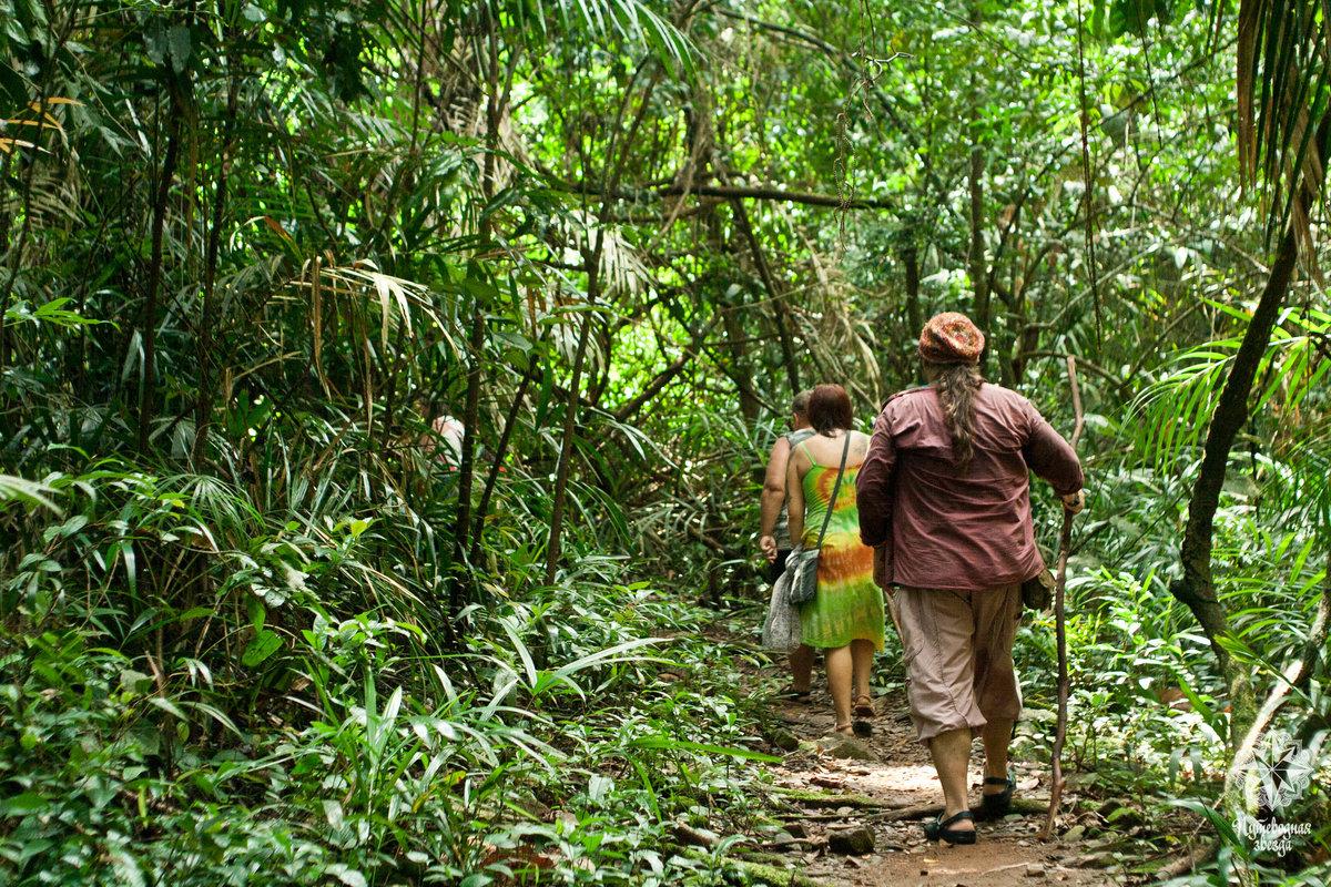 изучите, приготовьте джунгли в индии фото часы ходу
