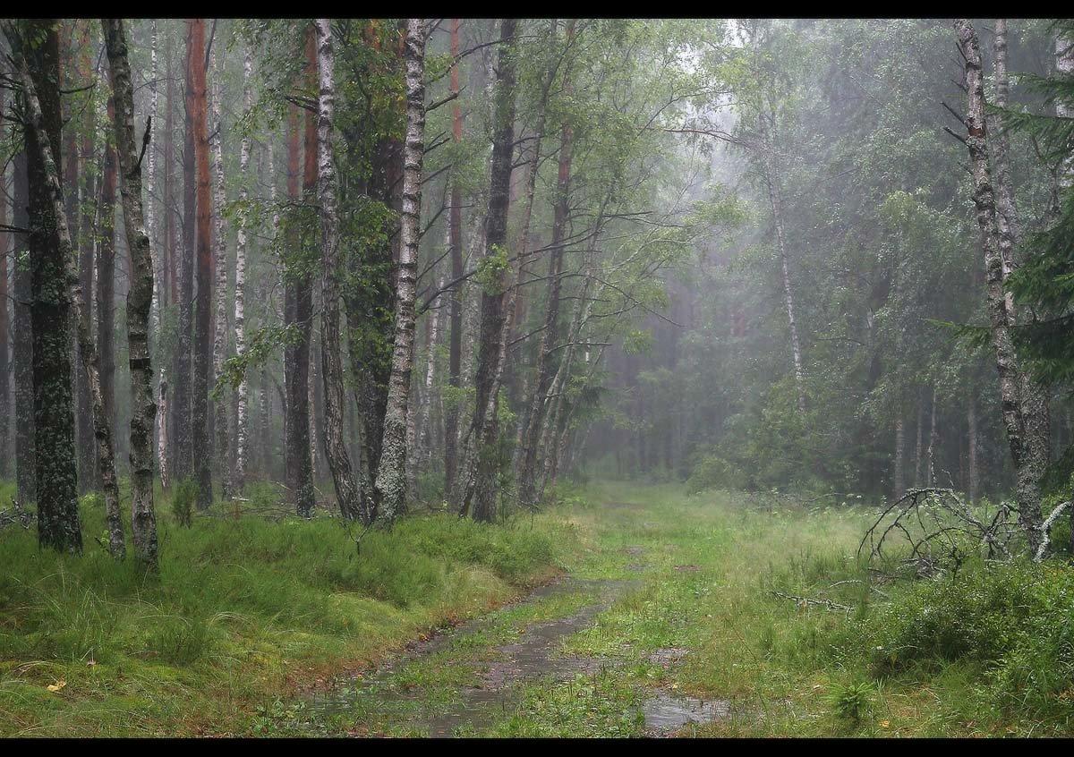 сравнить, например, фото дождливого леса мужчины считают