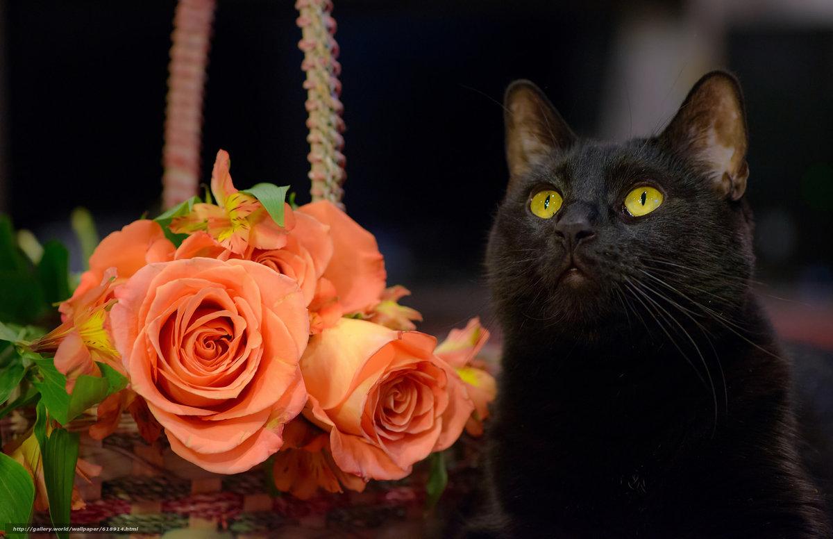 Картинки для рабочего стола котенок в розах