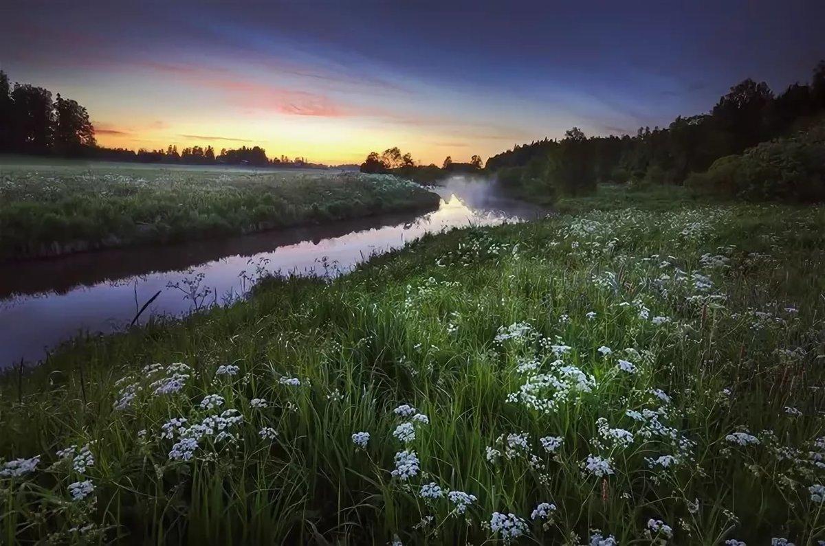 Летняя ночь картинки красивые