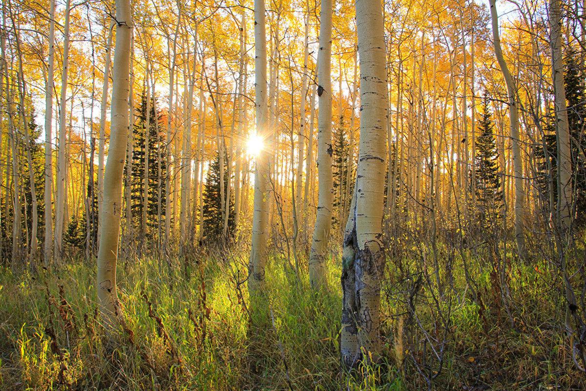 фото природа осень в лесах рощах россии стрижки укладки делать