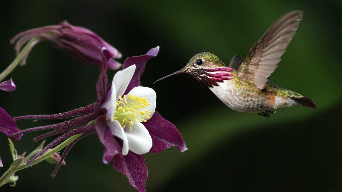 Колодцы смешные, картинка с колибри