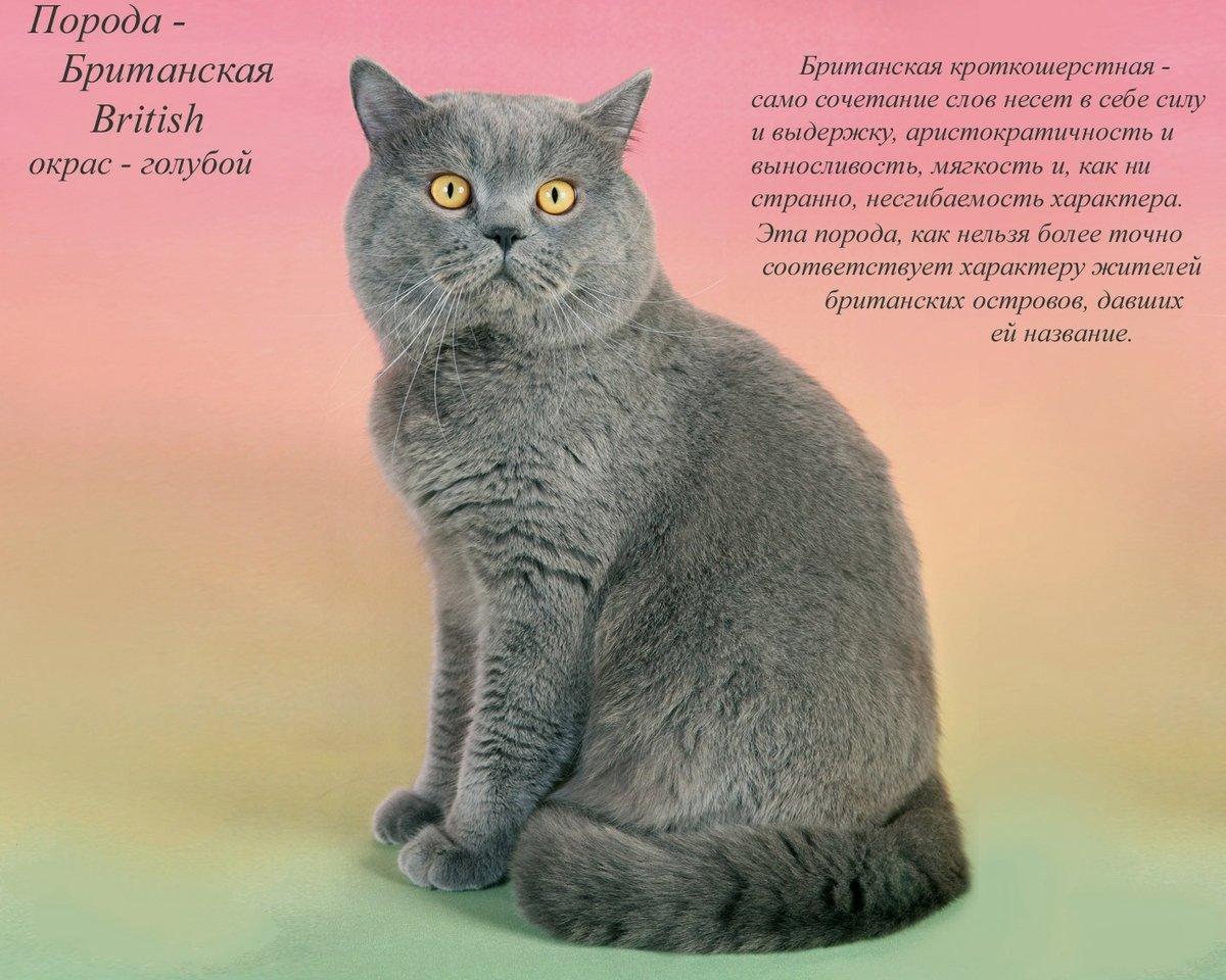 эфире разновидности кошек с картинками бренд считает