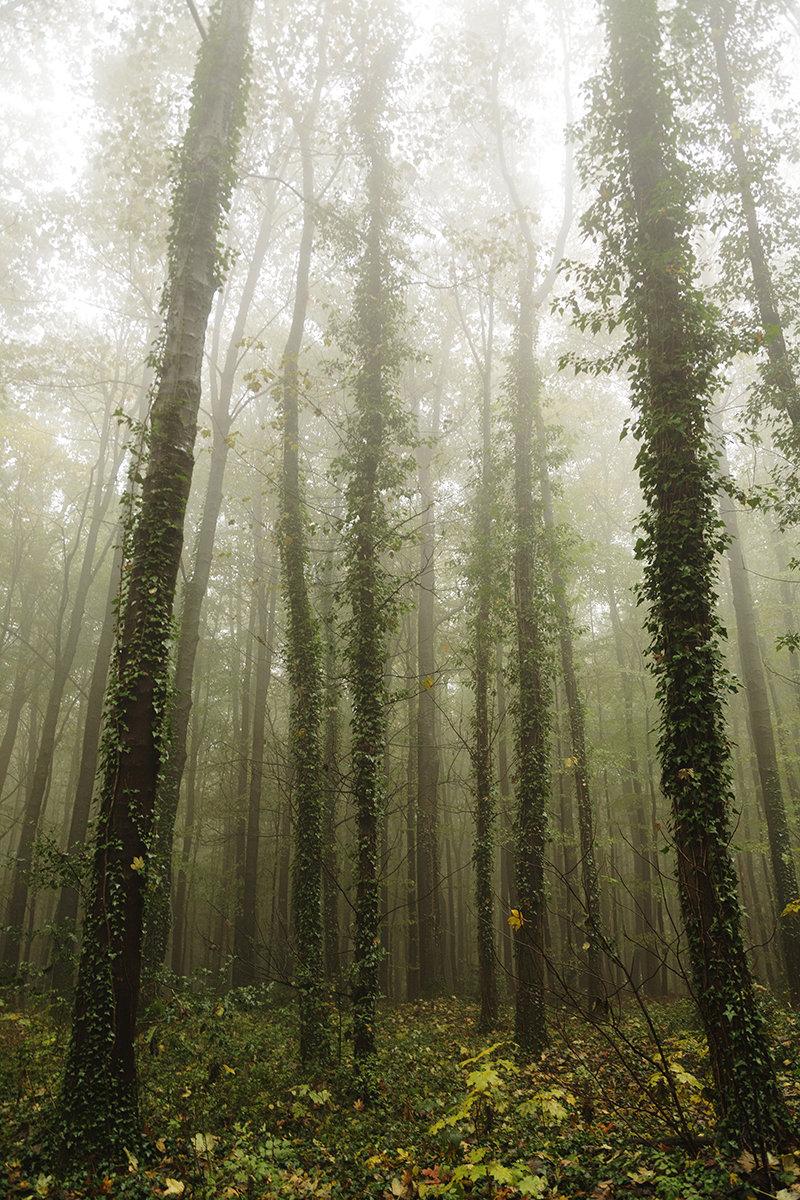 Германия туманные деревья