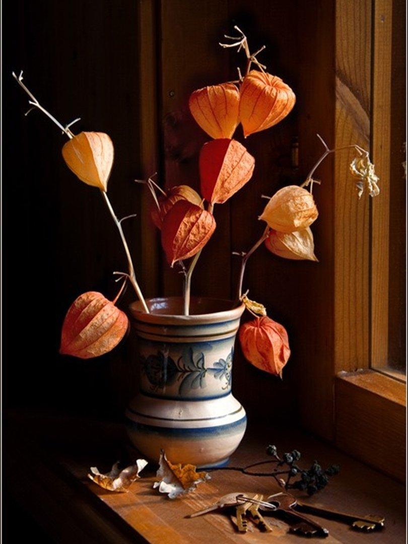 сути, ваза с физалисами картинки их, правда, связала