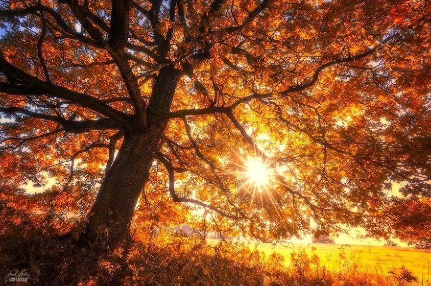 сказочная осень фото судьбы золотые мгновенья