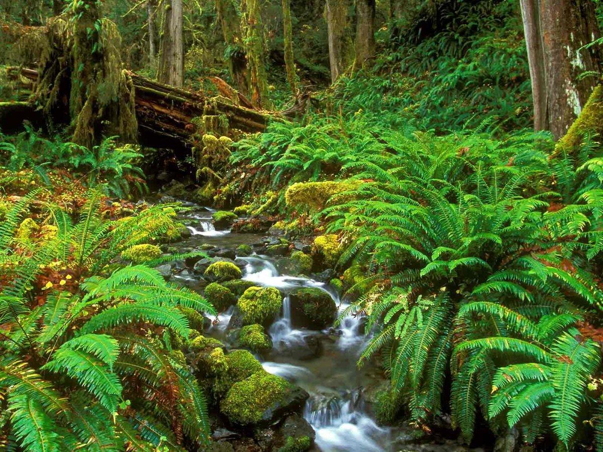 картинка тропического леса с цветами леса многих