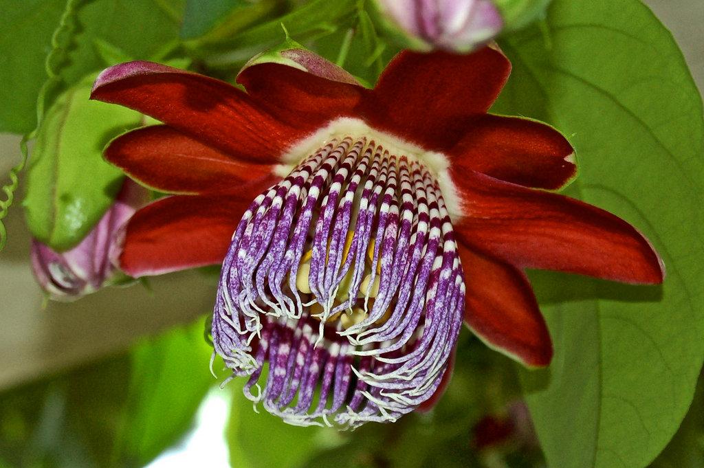 Экзотические растения фото и названия