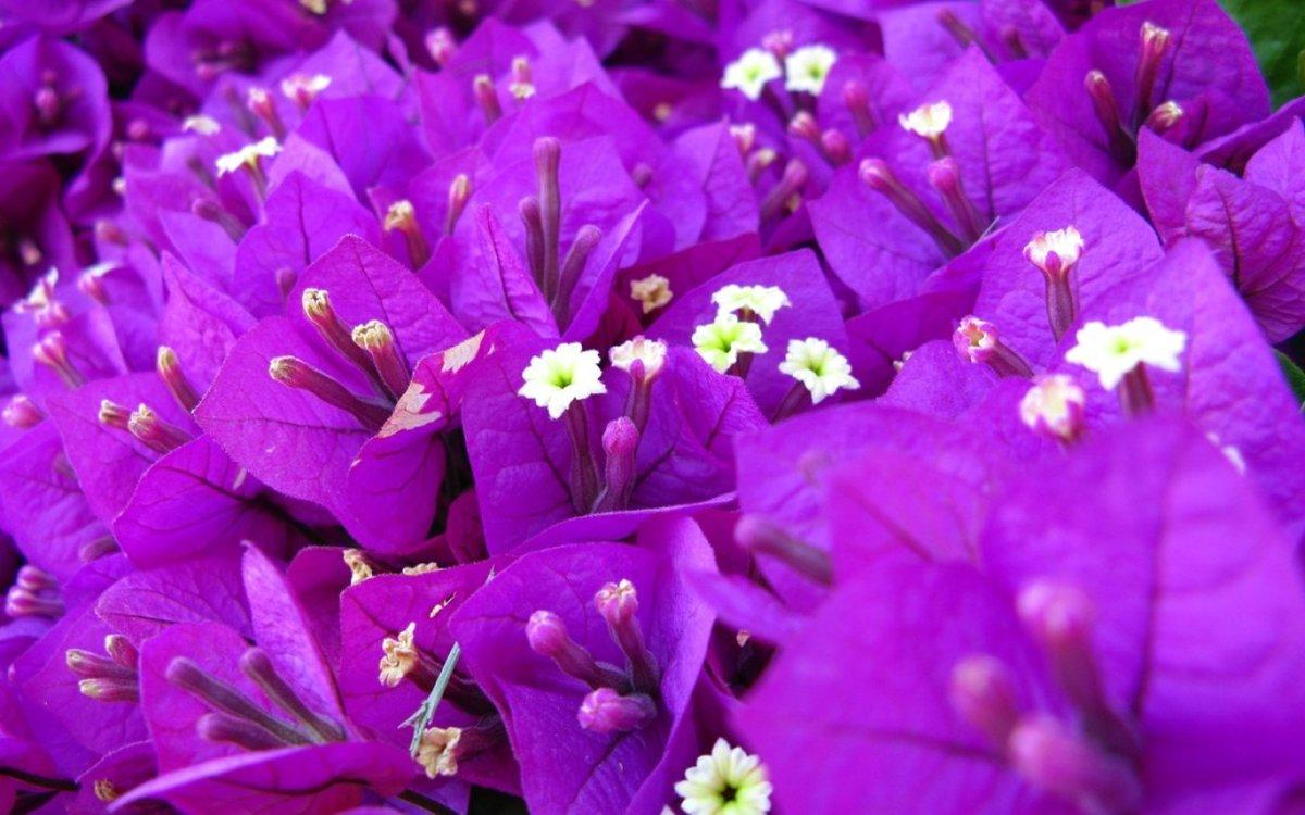 Картинки фиолетового цветка