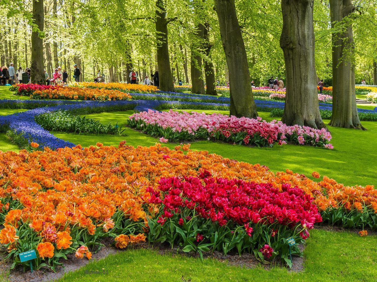 парки цветов мира фото красивые