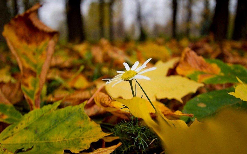 через осенние лесные цветы картинки подарок