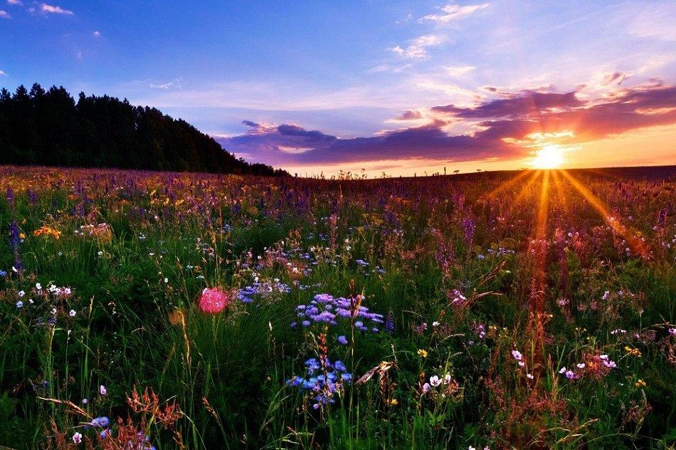 Картинки доброе утро рассвет лето цветы, бухгалтер картинка картинки
