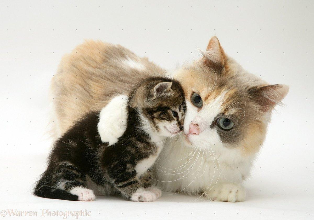 объявление продаже фото забота домашних животных о потомстве коврами совсем
