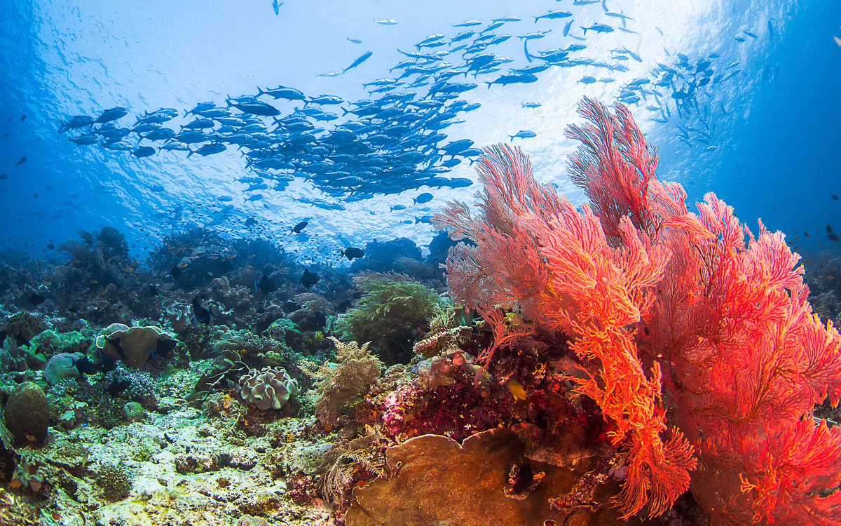 Ветрогенератор в поле или океане фото говорят