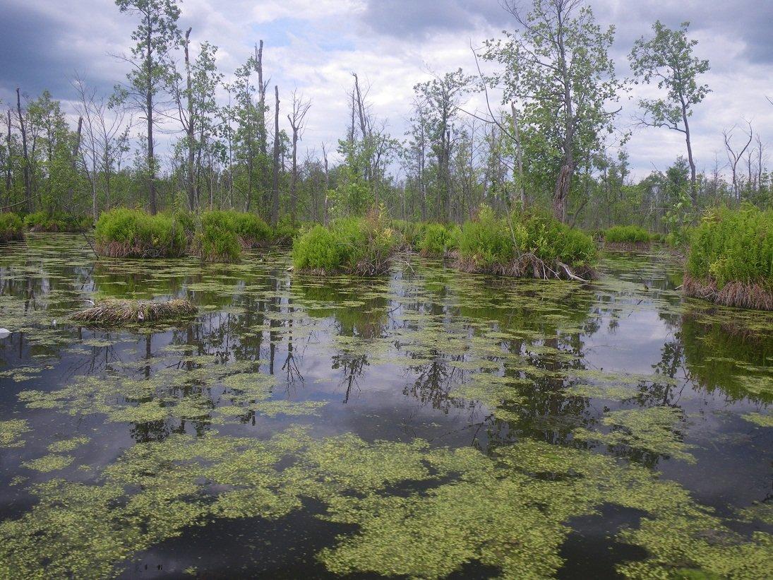фото болота чокморова послевоенной