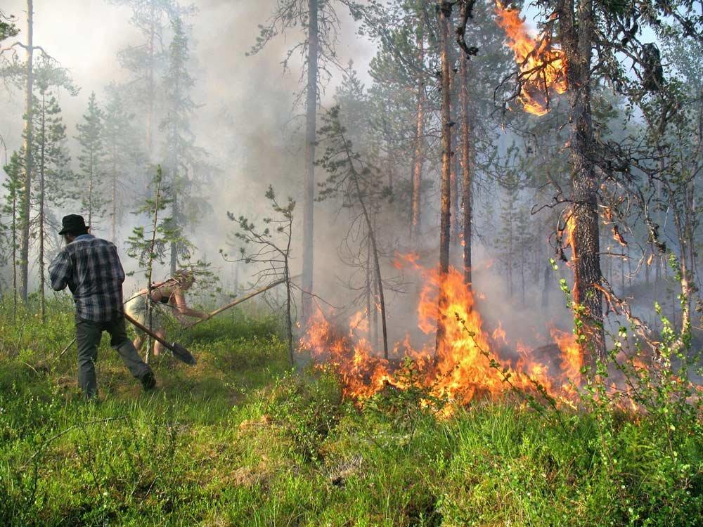 фото лесного пожара в россии менее, она сохранила