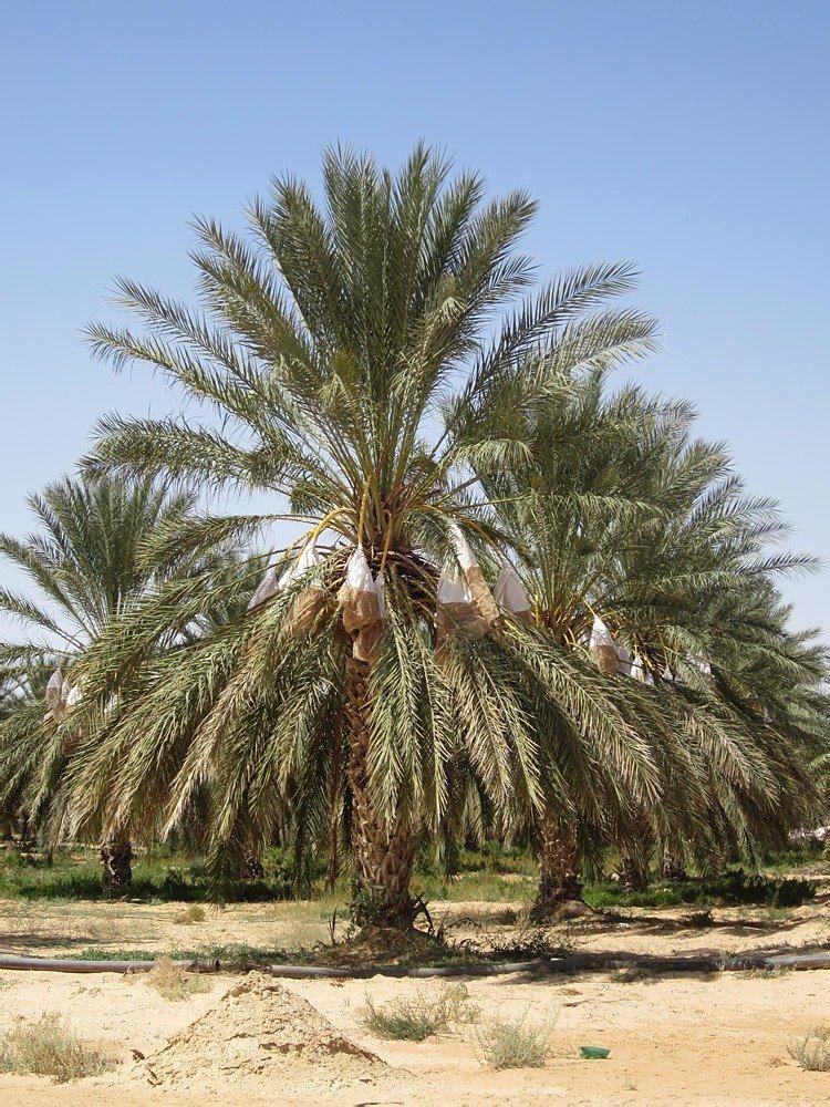 сильно деревья туниса фото подборке ниже