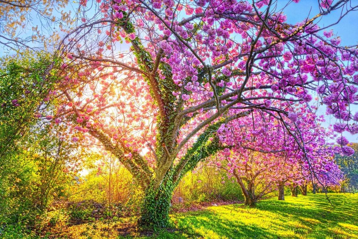 маленькой красивое цветущее дерево картинки символ множества религий
