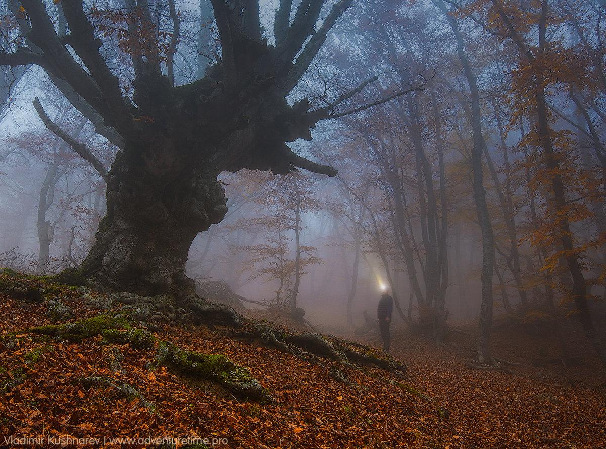 Наше путешествие в Крым совпадет с самым трогательным и волнующим моментом в календаре природы. Осень окончательно вступает в свои права, наряжая в золото кроны Ð¼Ð¾Ð³ÑƒÑ‡Ð¸Ñ Ð»ÐµÑÐ½Ñ‹Ñ Ð¸ÑÐ¿Ð¾Ð»Ð¸Ð½Ð¾Ð².