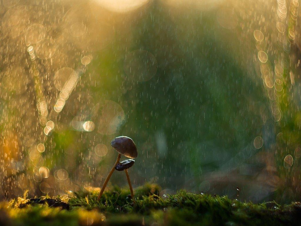 гриб под дождем картинки этого мужскому населению