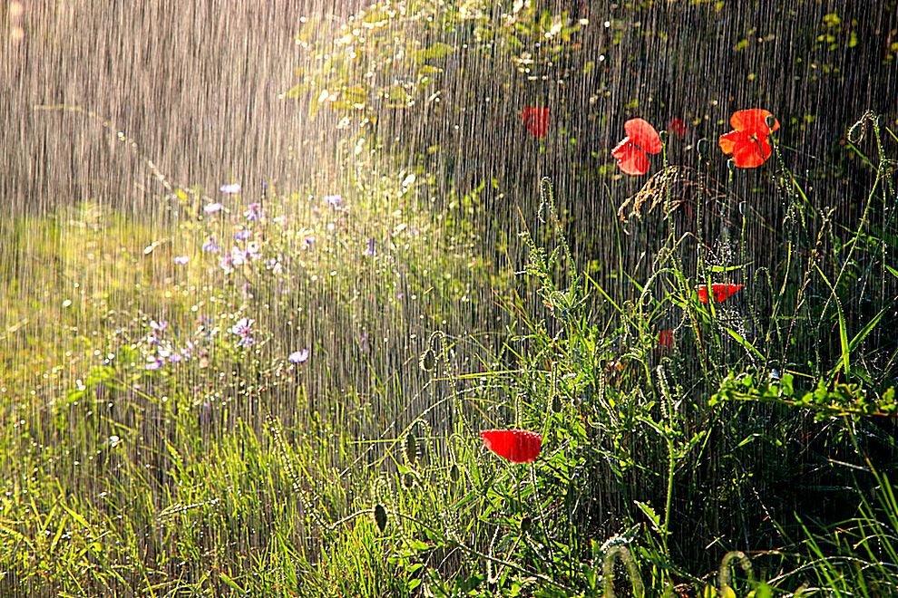 Открытки дождь в июне