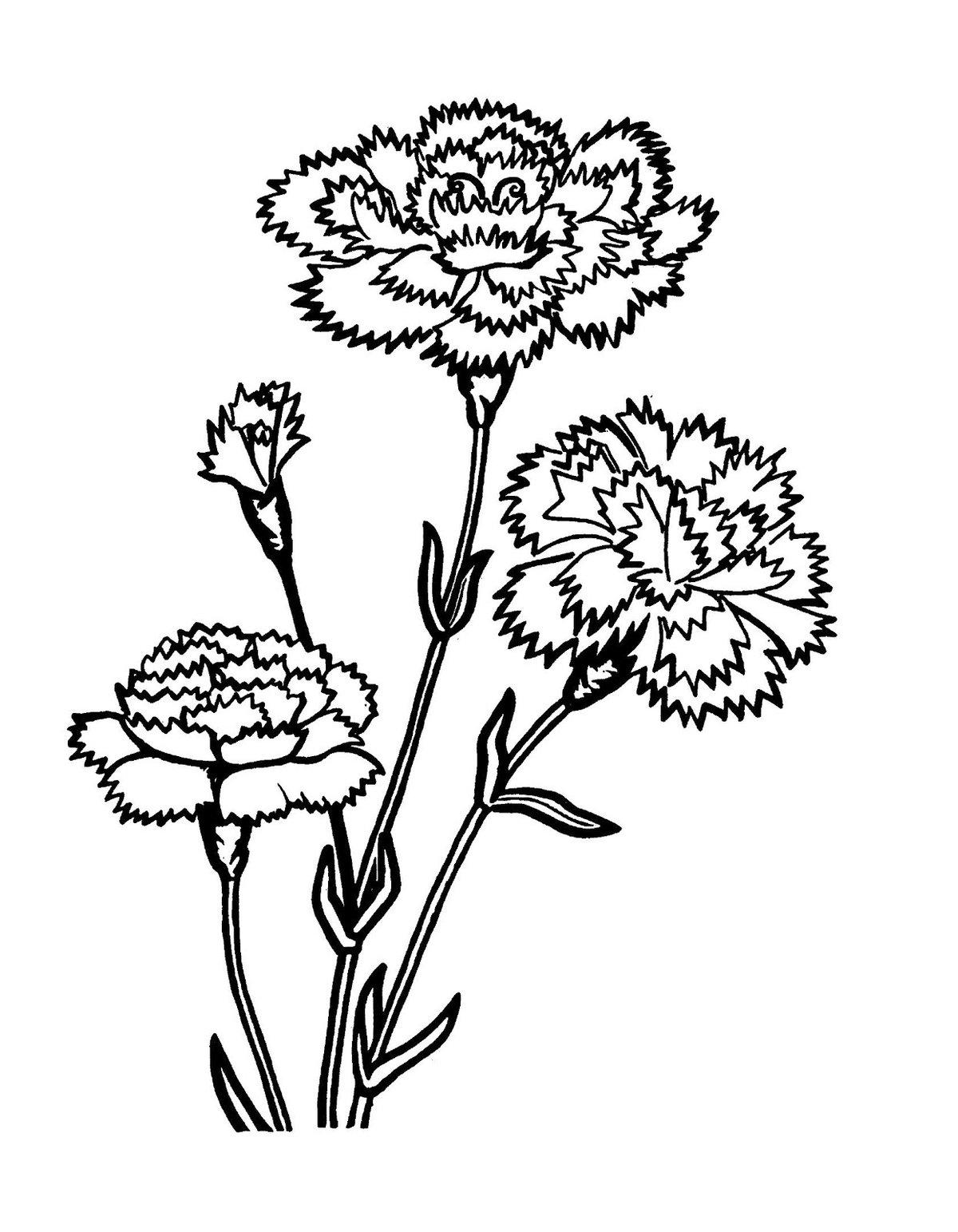 Цветы к 9 мая картинки раскраски, прикольные