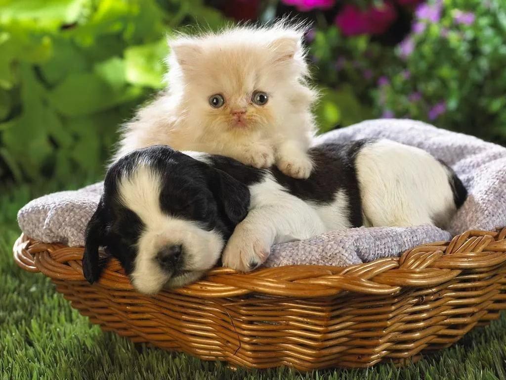 Смешные котики и собачки картинки, букет картинки