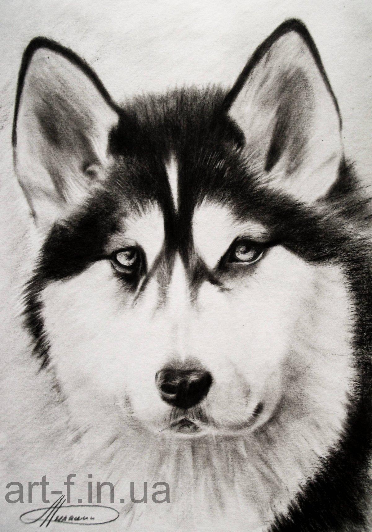 Красивые картинки про животных срисовать