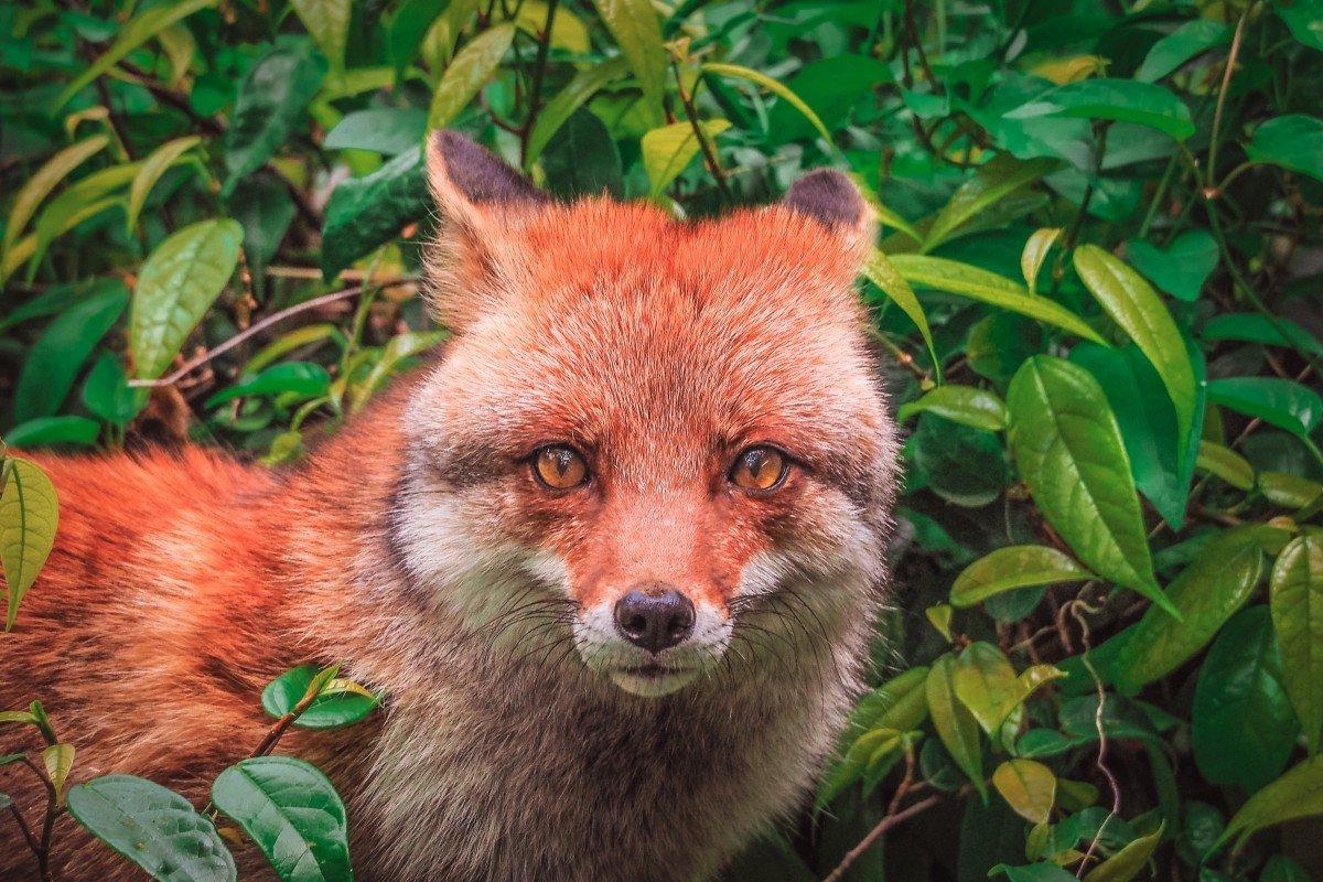 волгоградской растительный и животный мир японии фото любит выглядит хорошо
