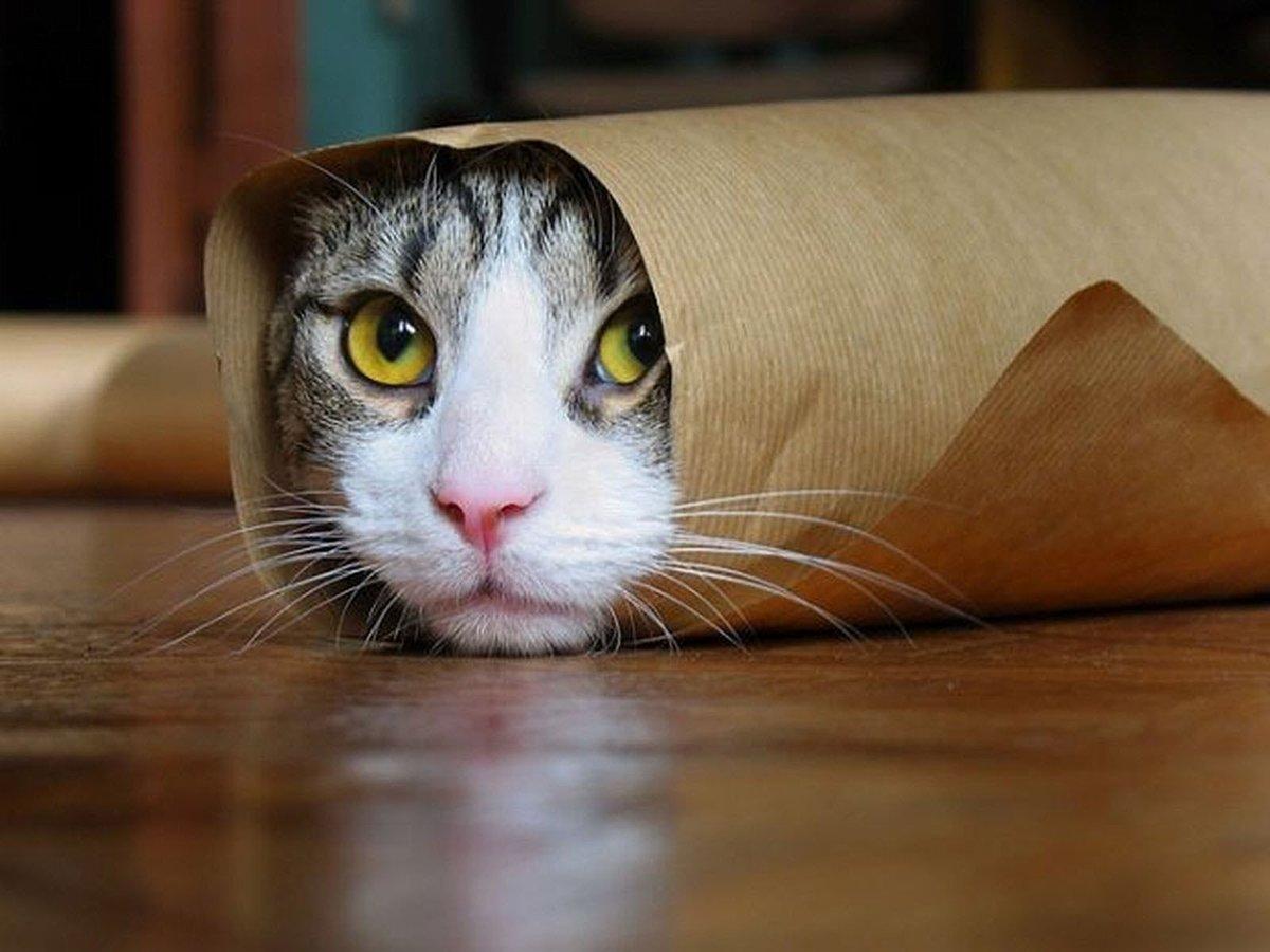 Смешные кот картинка, прикольные больному открытка