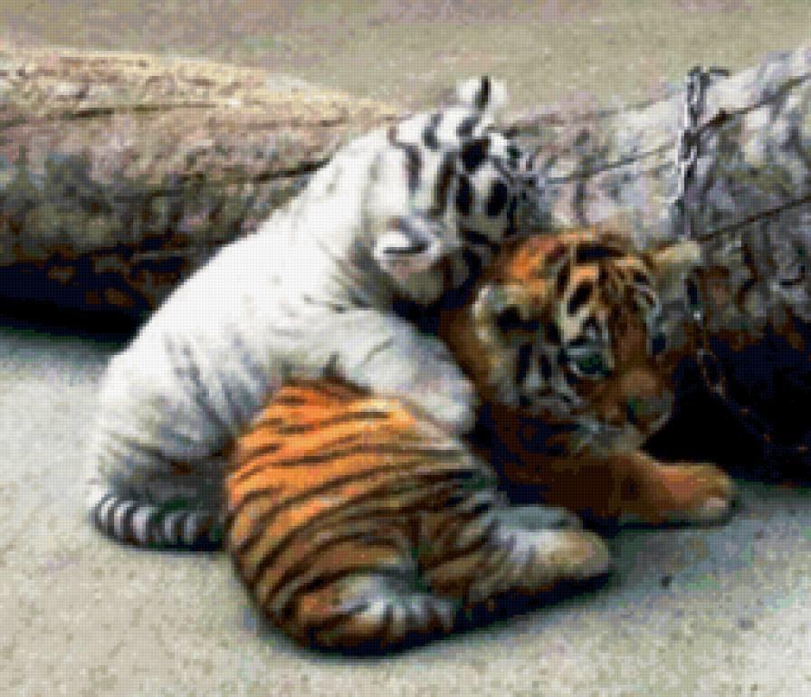 Милые тигрята. Животные и растения. Добавила Алёна Жлуктенко