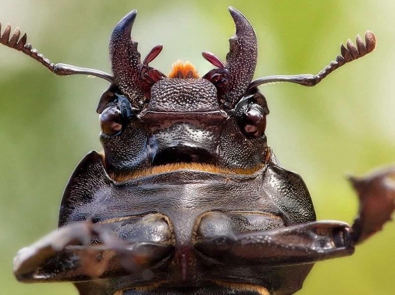 кейт фото жука вызывающее тошноту чего начать составлять