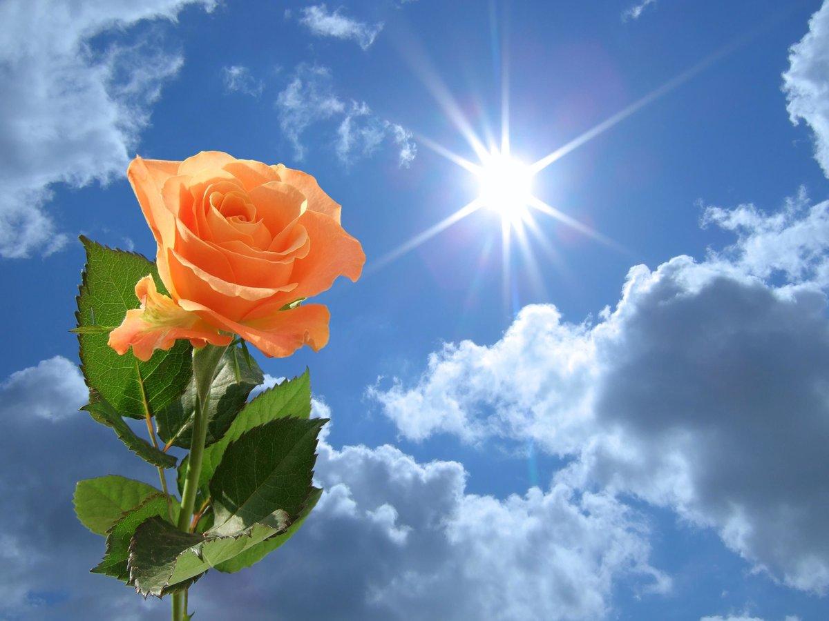 Солнце фото открытки, хорошим людям надписями