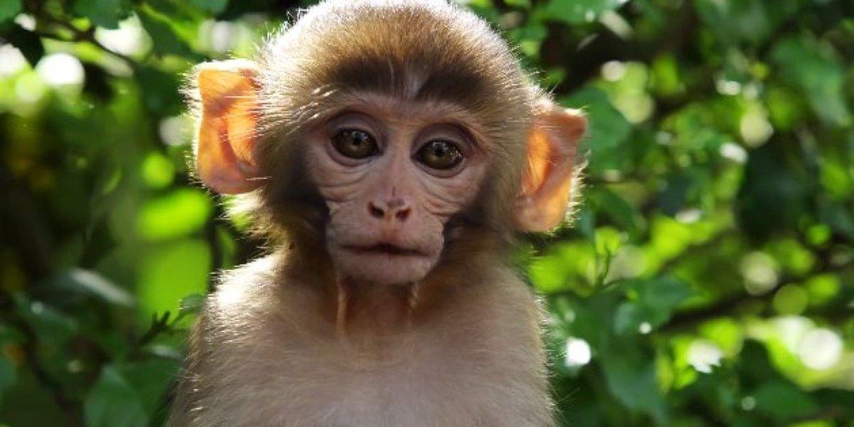 картинка обезьянка в мире говоря, вильнюс мне