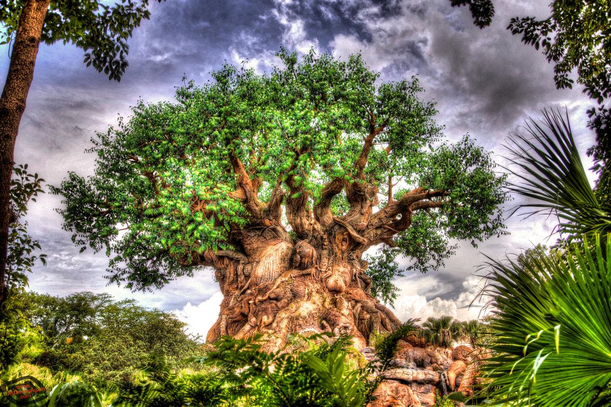 правило, сказочные деревья фото изделие