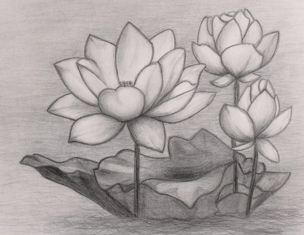 Lotus Flower Pencil Drawing Lily Pad Sketch Tattoo Pinterest