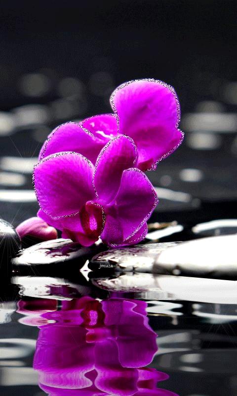Рабочий, картинка орхидея анимация