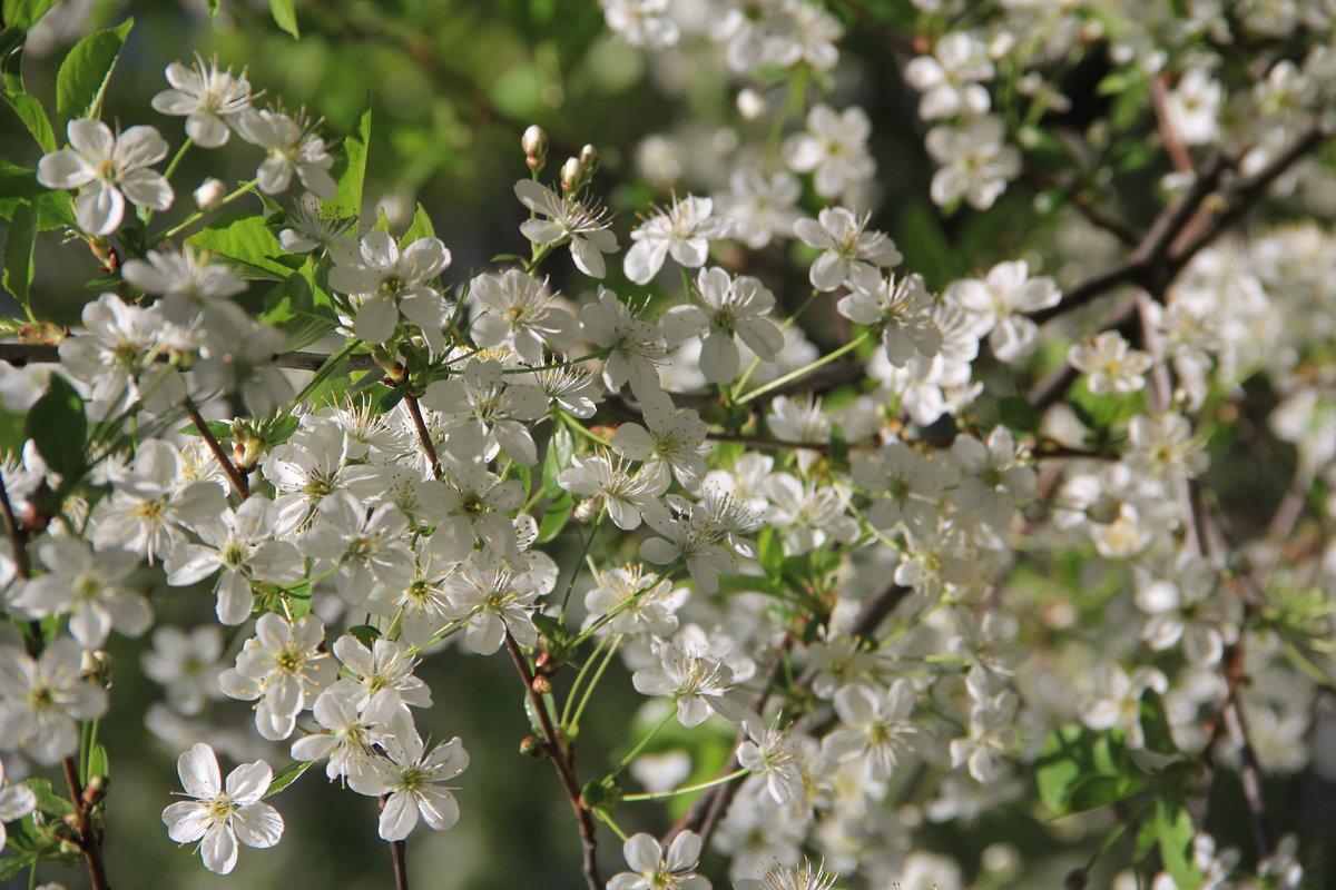 цены система фотографии майского цветения оснащению уступит многим