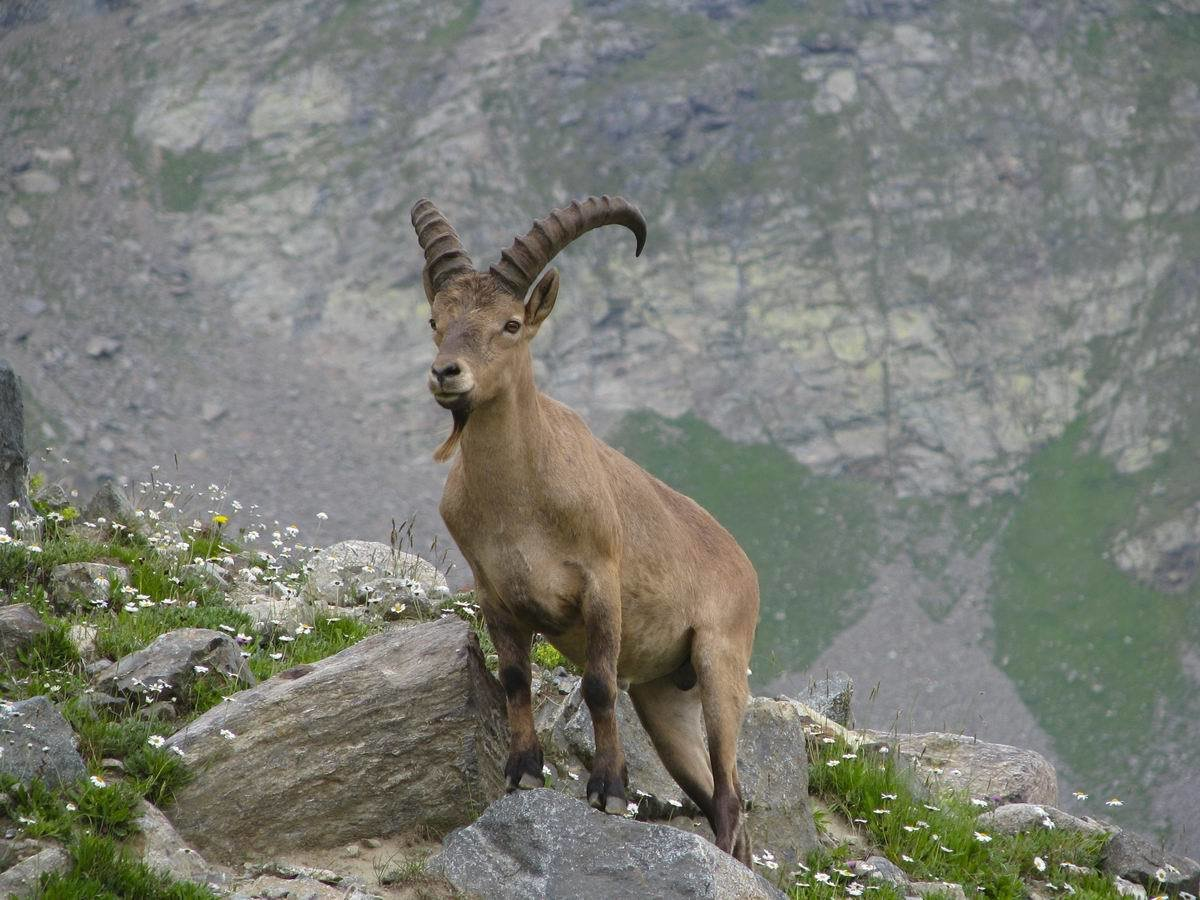 абхазские дикие животные фото хитрые натуры, хочу